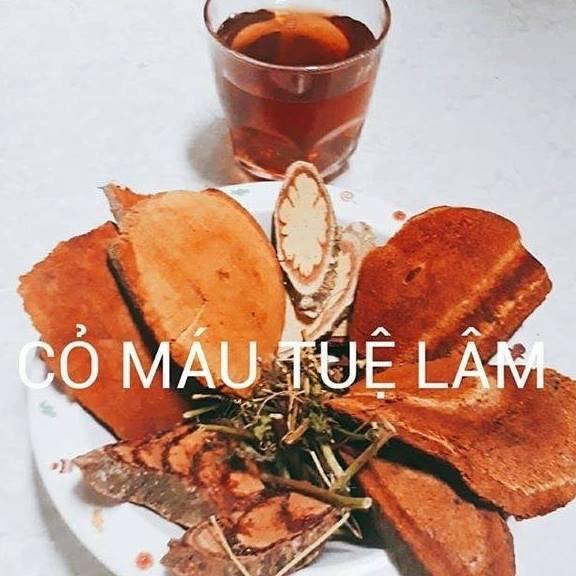 Cây Cỏ Máu Quảng Bình
